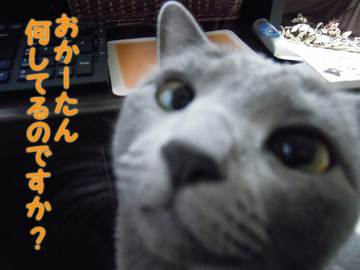 10-03-03-3.JPG
